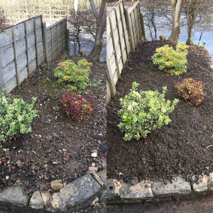 Woodland garden - before and after
