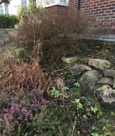 Shrub and Herb Garden part 1